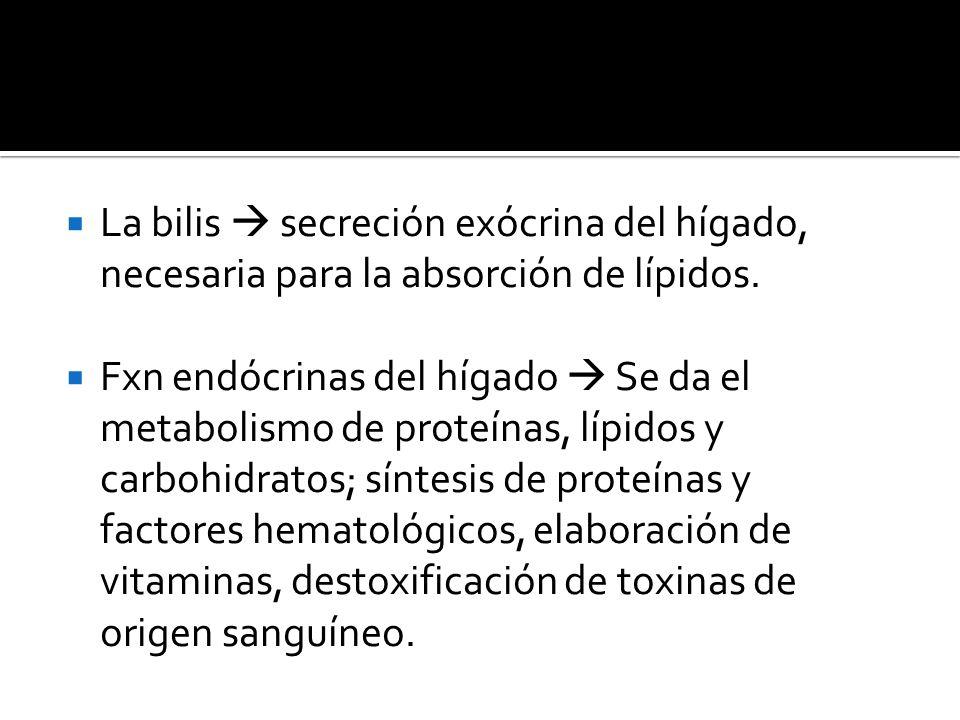 La bilis  secreción exócrina del hígado, necesaria para la absorción de lípidos.