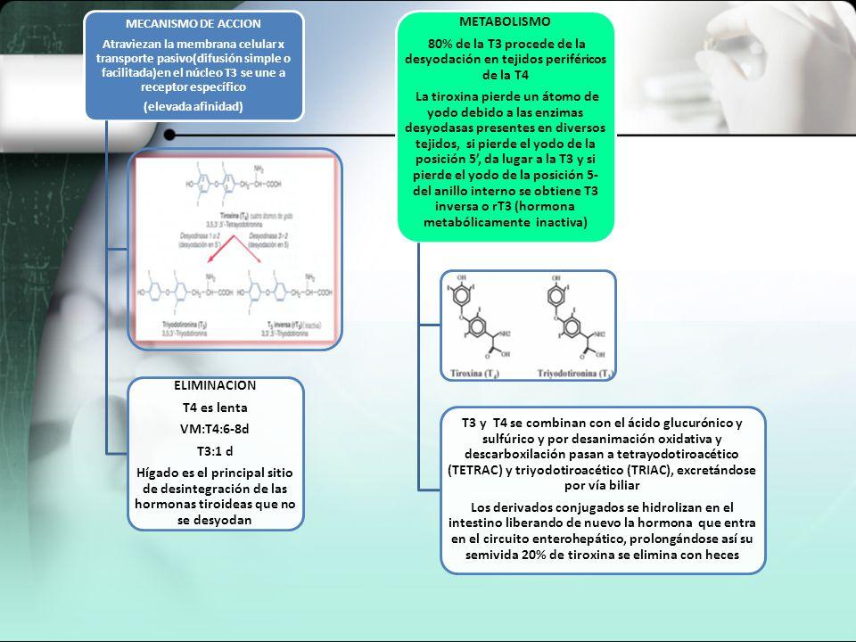 80% de la T3 procede de la desyodación en tejidos periféricos de la T4
