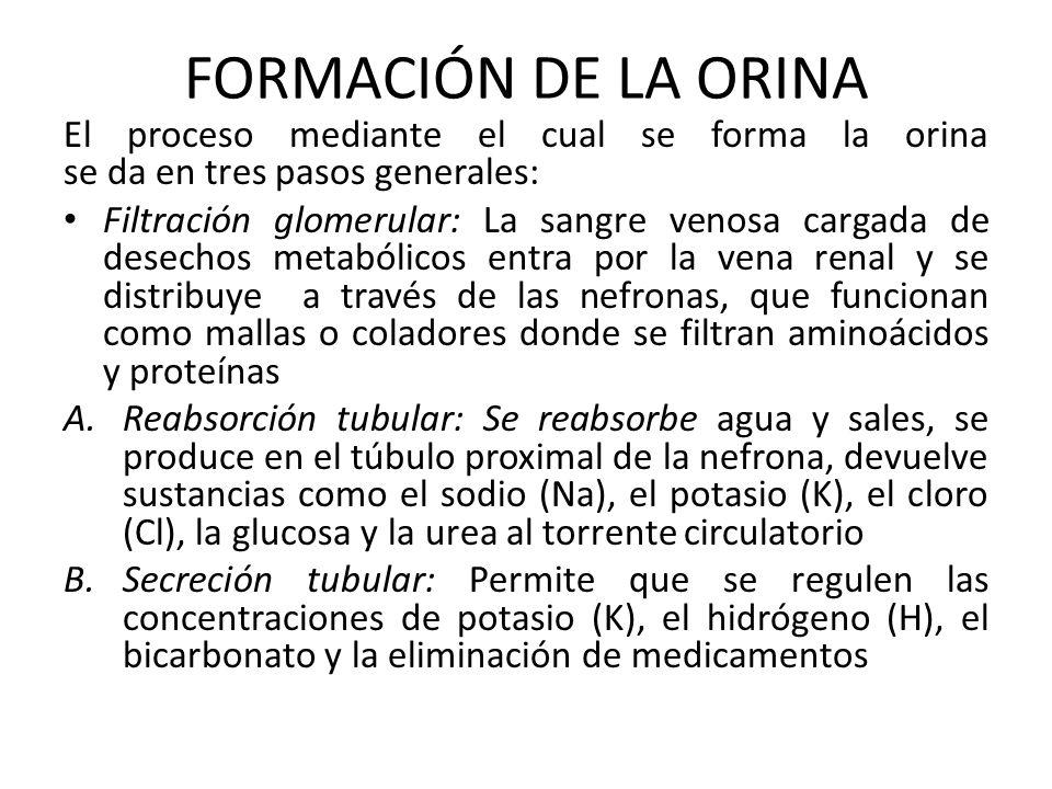 FORMACIÓN DE LA ORINA El proceso mediante el cual se forma la orina se da en tres pasos generales: