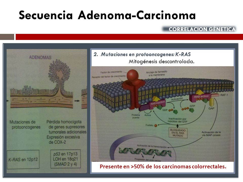 Presente en ˃50% de los carcinomas colorrectales.