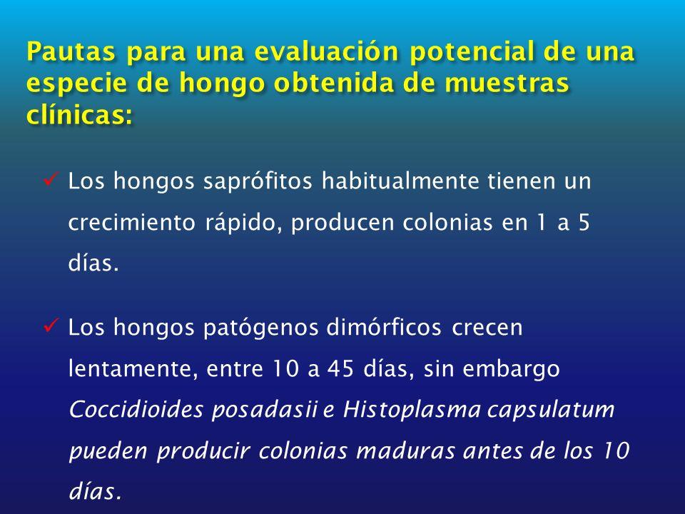 Pautas para una evaluación potencial de una especie de hongo obtenida de muestras clínicas: