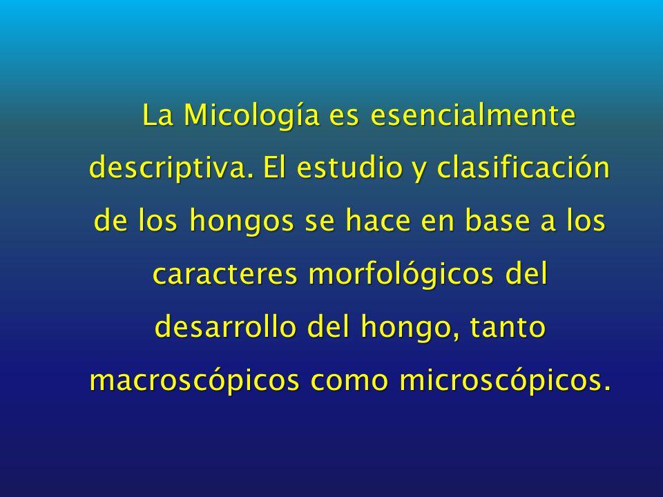 La Micología es esencialmente descriptiva
