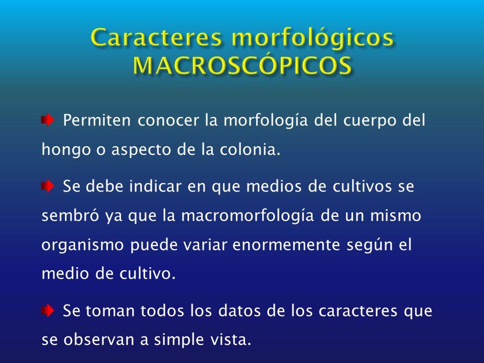 Caracteres morfológicos MACROSCÓPICOS