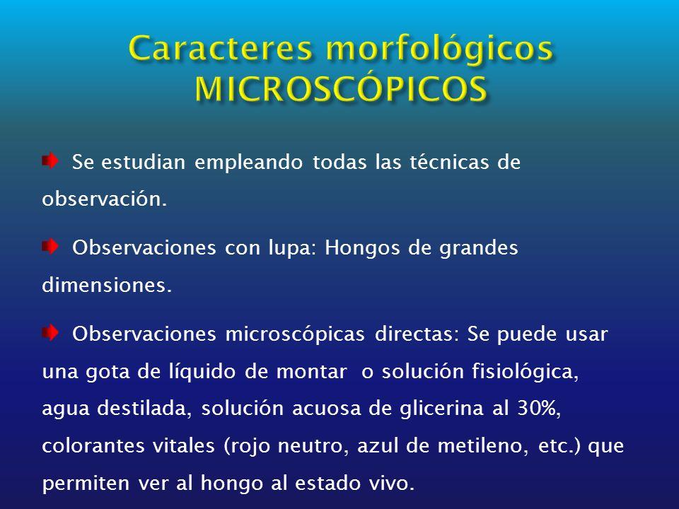 Caracteres morfológicos MICROSCÓPICOS