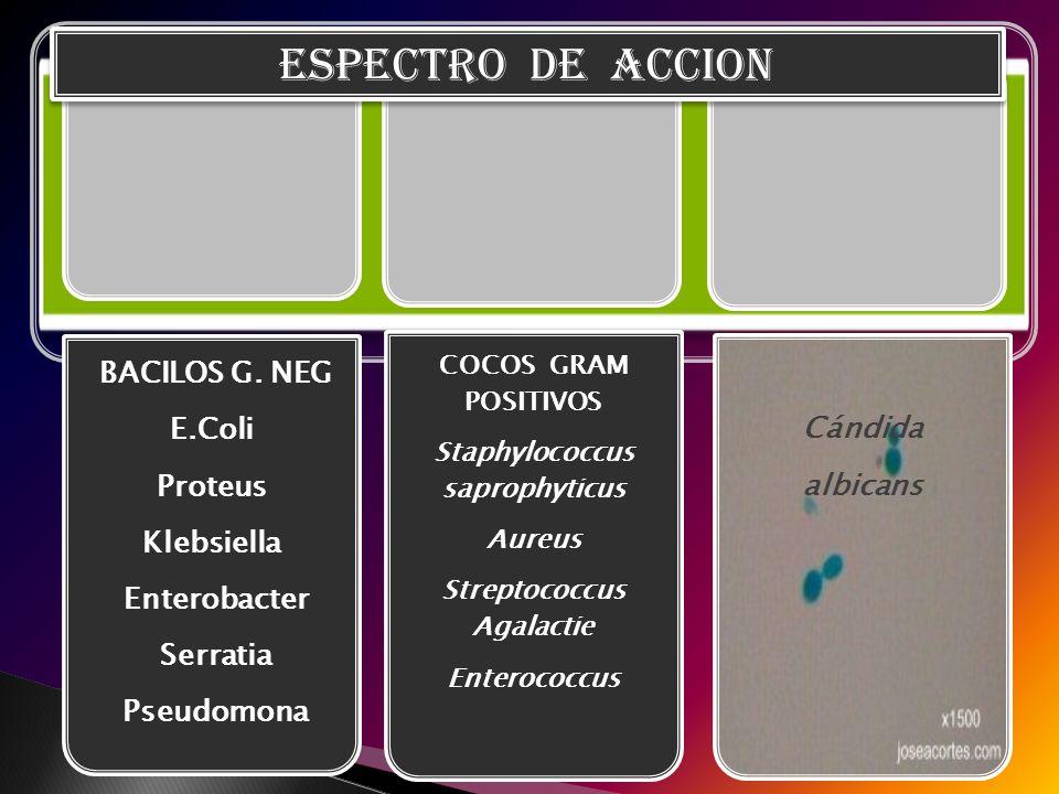Staphylococcus saprophyticus Streptococcus Agalactie