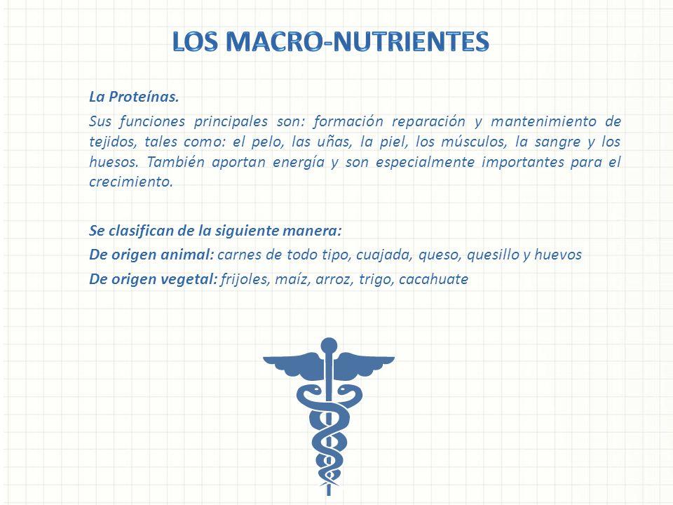 Los Macro-nutrientes La Proteínas.
