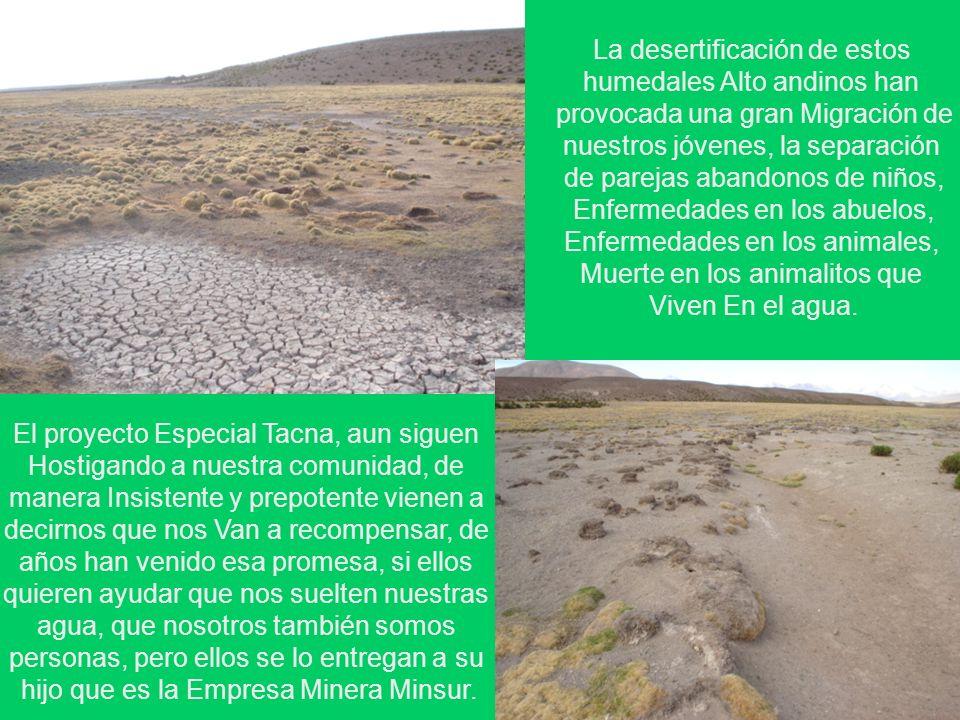 La desertificación de estos humedales Alto andinos han