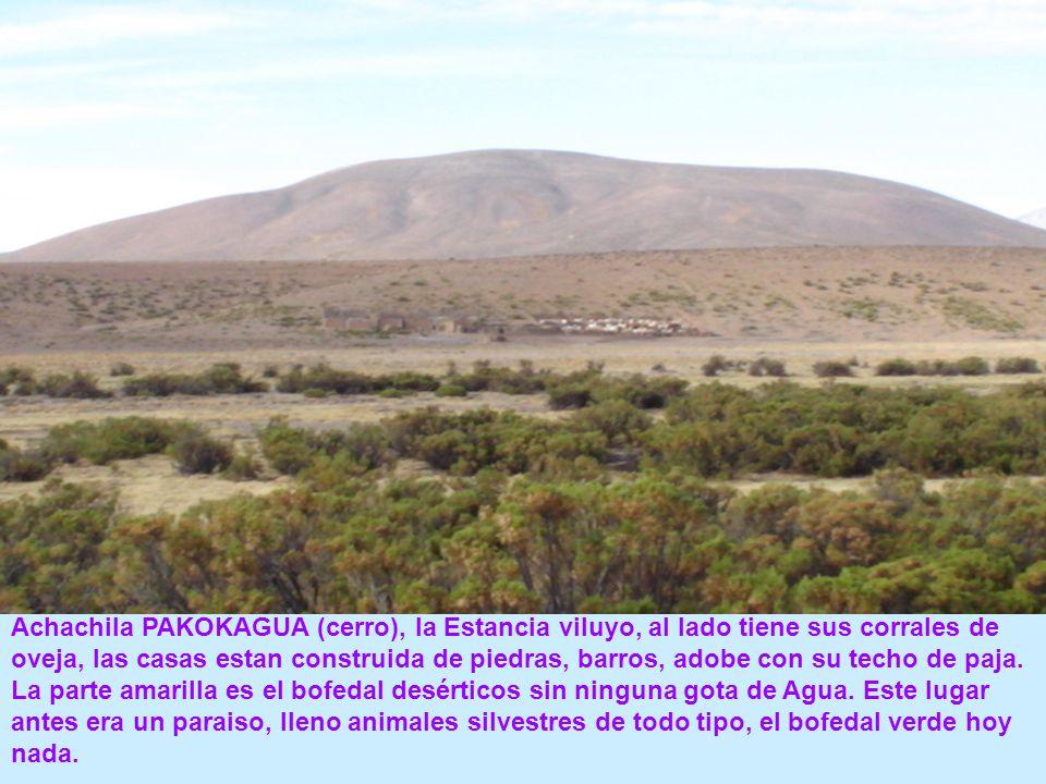 Achachila PAKOKAGUA (cerro), la Estancia viluyo, al lado tiene sus corrales de oveja, las casas estan construida de piedras, barros, adobe con su techo de paja.