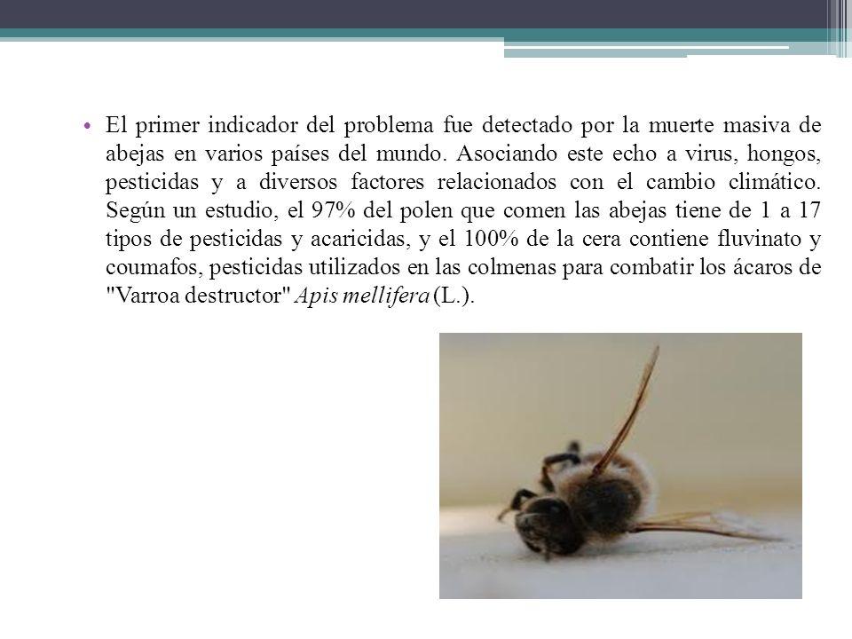 El primer indicador del problema fue detectado por la muerte masiva de abejas en varios países del mundo.