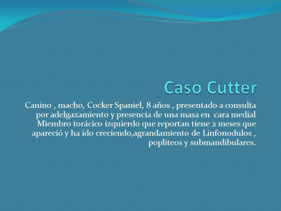 Caso Cutter