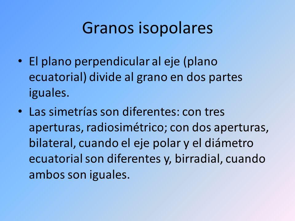 Granos isopolares El plano perpendicular al eje (plano ecuatorial) divide al grano en dos partes iguales.