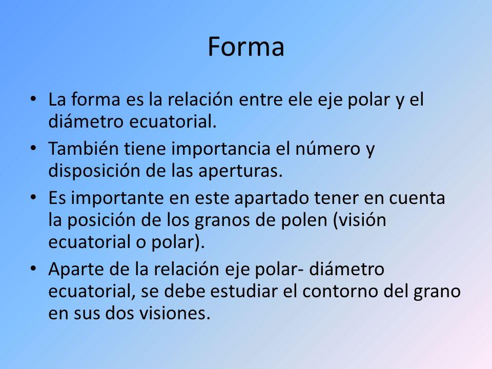Forma La forma es la relación entre ele eje polar y el diámetro ecuatorial. También tiene importancia el número y disposición de las aperturas.