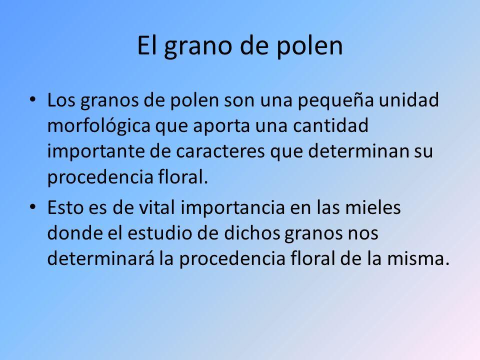 El grano de polen