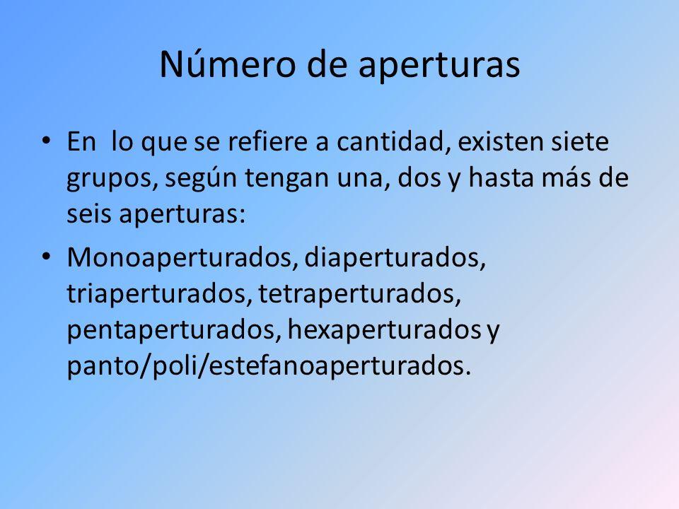 Número de aperturas En lo que se refiere a cantidad, existen siete grupos, según tengan una, dos y hasta más de seis aperturas: