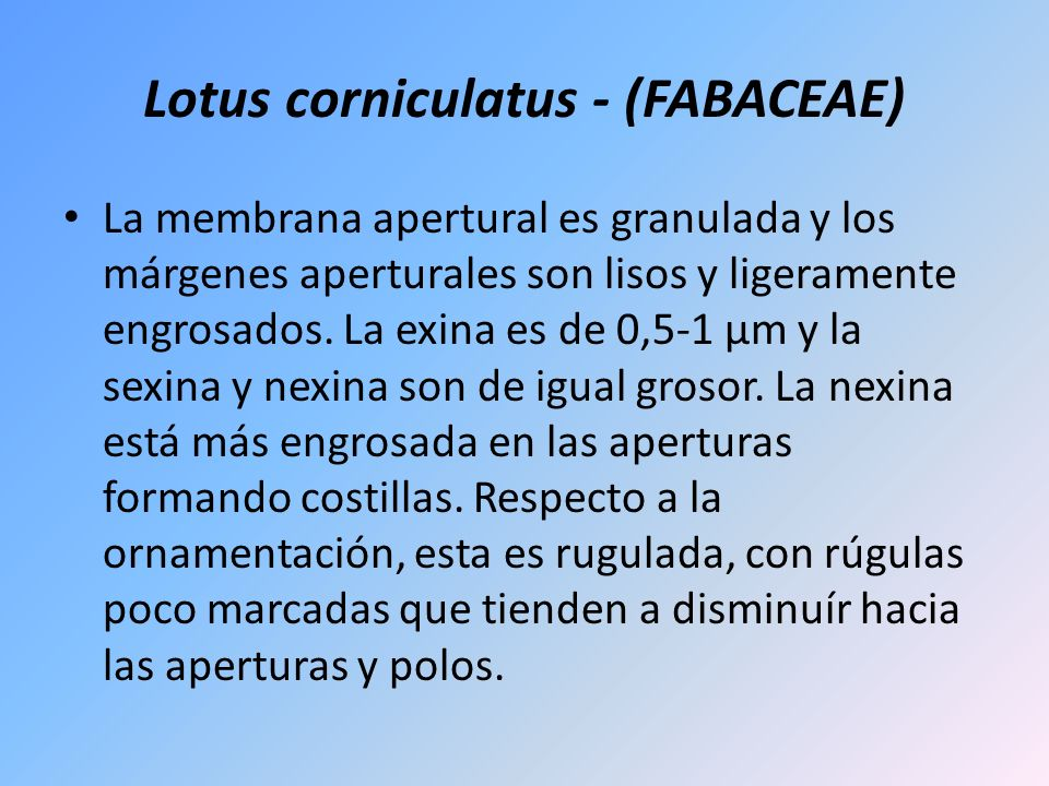 Lotus corniculatus - (FABACEAE)