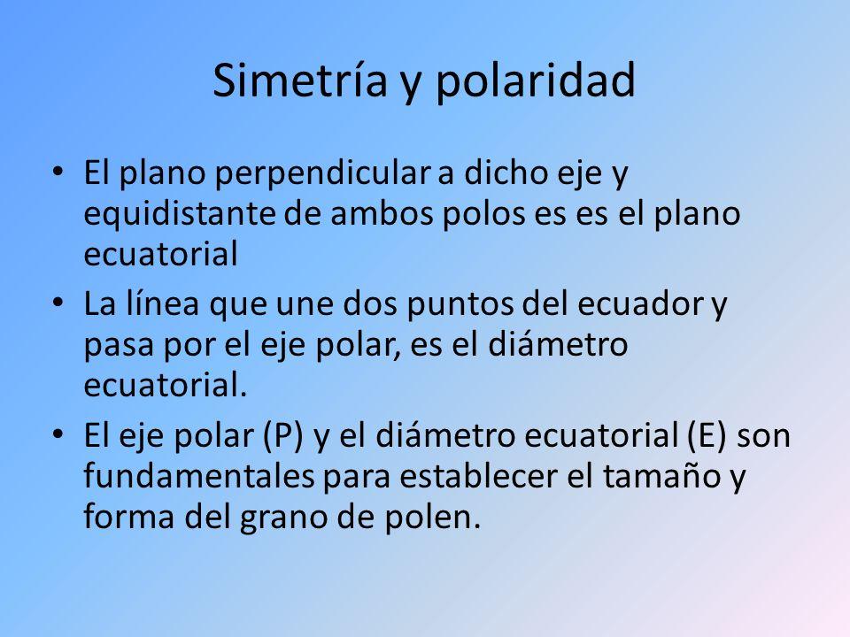 Simetría y polaridad El plano perpendicular a dicho eje y equidistante de ambos polos es es el plano ecuatorial.