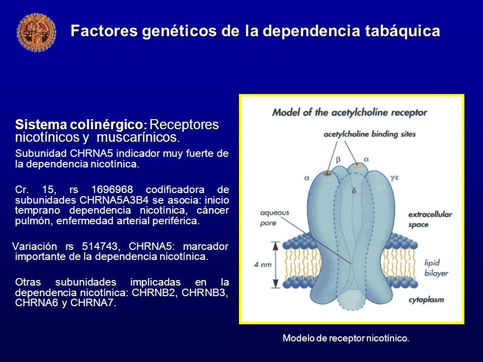 Factores genéticos de la dependencia tabáquica
