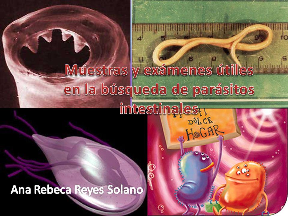 Muestras y exámenes útiles en la búsqueda de parásitos intestinales