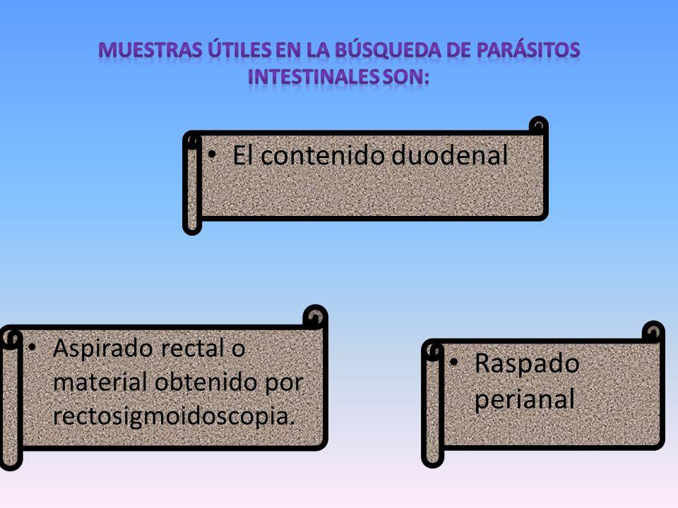 muestras útiles en la búsqueda de parásitos intestinales son: