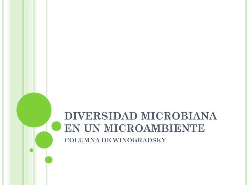 DIVERSIDAD MICROBIANA EN UN MICROAMBIENTE