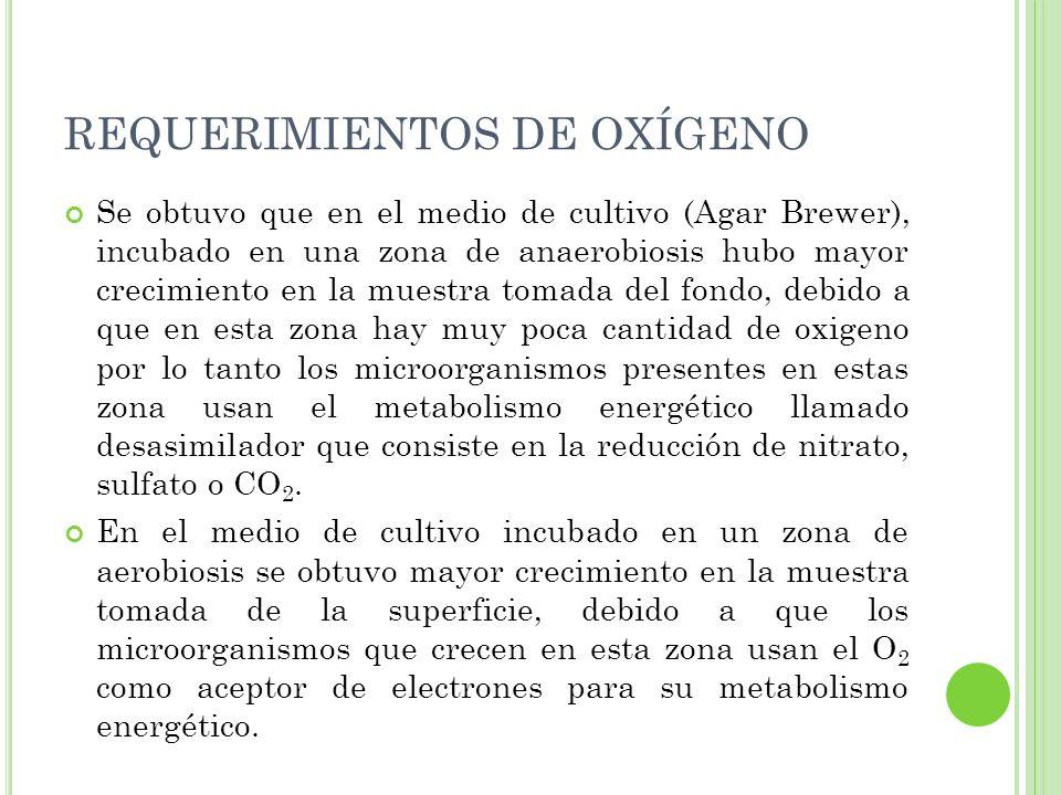 REQUERIMIENTOS DE OXÍGENO