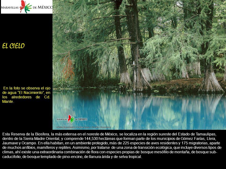 EL CIELO En la foto se observa el ojo de agua El Nacimiento , en los alrededores de Cd. Mante.