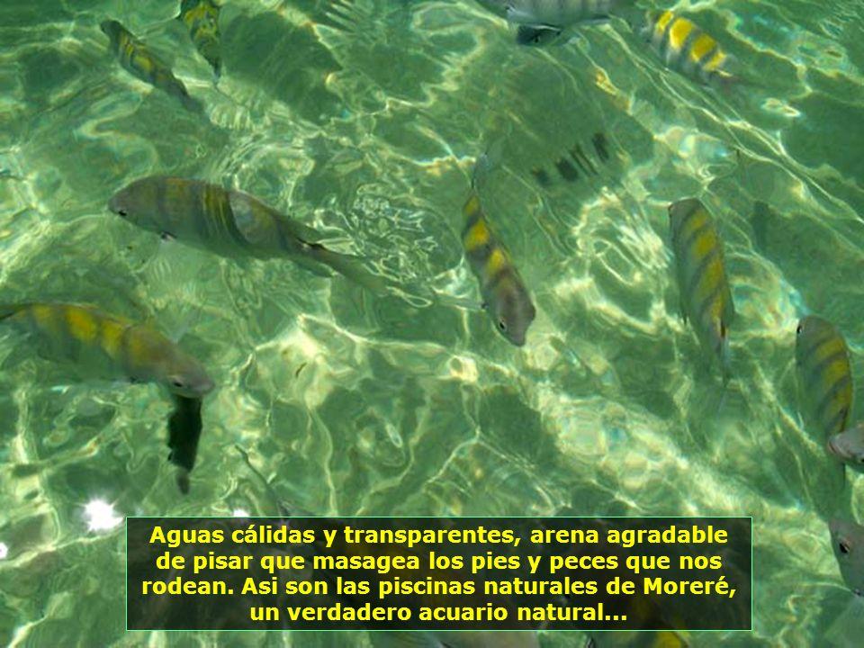 P0013834 - MORRO DE SÃO PAULO - PISCINAS NATURAIS DE MORERÉ-700