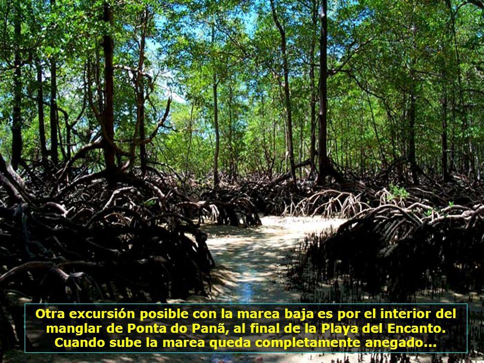 P0014008 - MORRO DE SÃO PAULO - MANGUE NA PONTA DO PANÃ-700