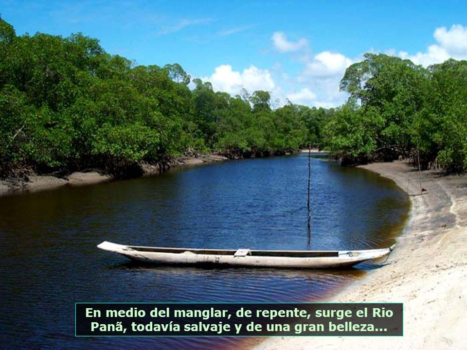 P0014024 - MORRO DE SÃO PAULO - MANGUE NA PONTA DO PANÃ E RIO DO PANÃ-700
