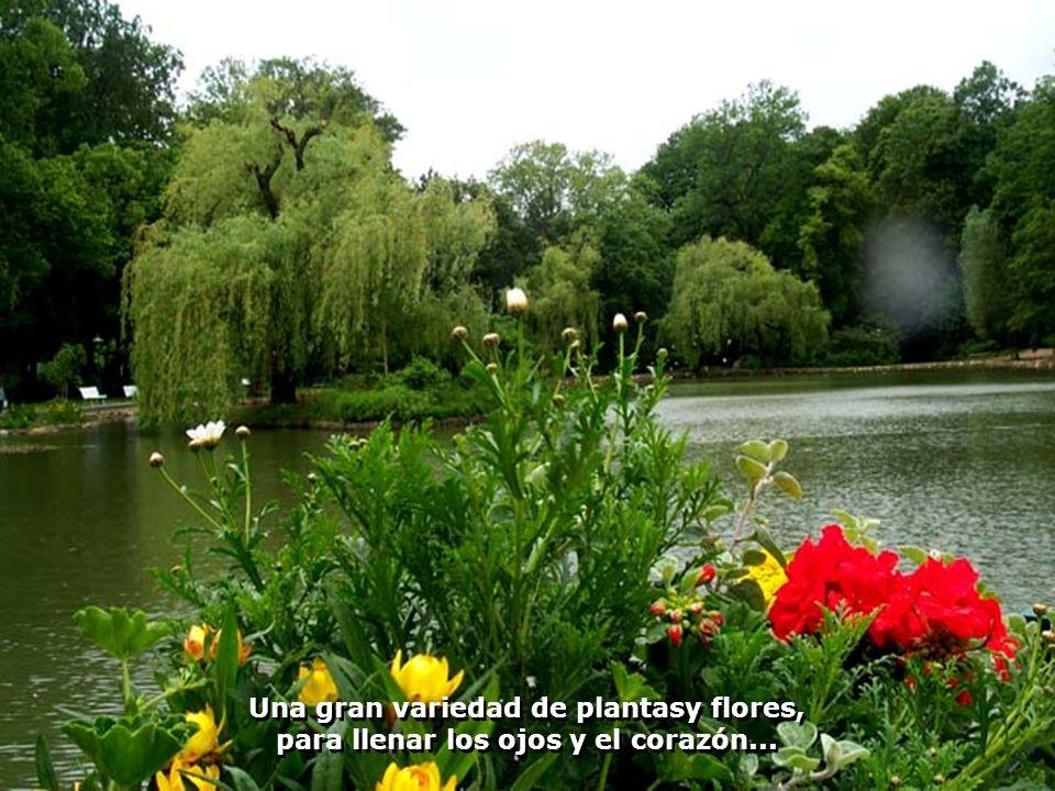 Una gran variedad de plantasy flores, para llenar los ojos y el corazón...