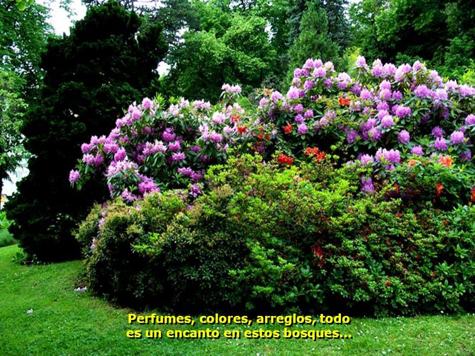 Perfumes, colores, arreglos, todo es un encanto en estos bosques...