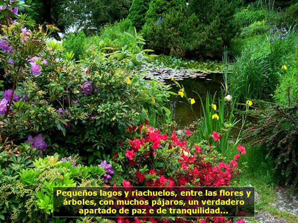 Pequeños lagos y riachuelos, entre las flores y árboles, con muchos pájaros, un verdadero apartado de paz e de tranquilidad...