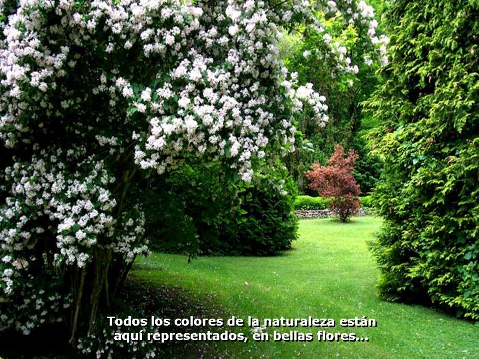 Todos los colores de la naturaleza están aquí representados, en bellas flores...