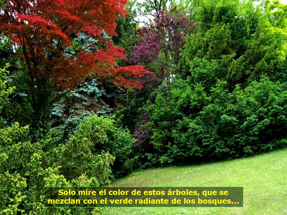 Solo mire el color de estos árboles, que se mezclan con el verde radiante de los bosques...
