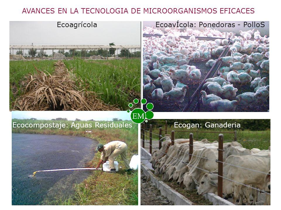 AVANCES EN LA TECNOLOGIA DE MICROORGANISMOS EFICACES