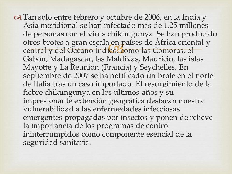 Tan solo entre febrero y octubre de 2006, en la India y Asia meridional se han infectado más de 1,25 millones de personas con el virus chikungunya.