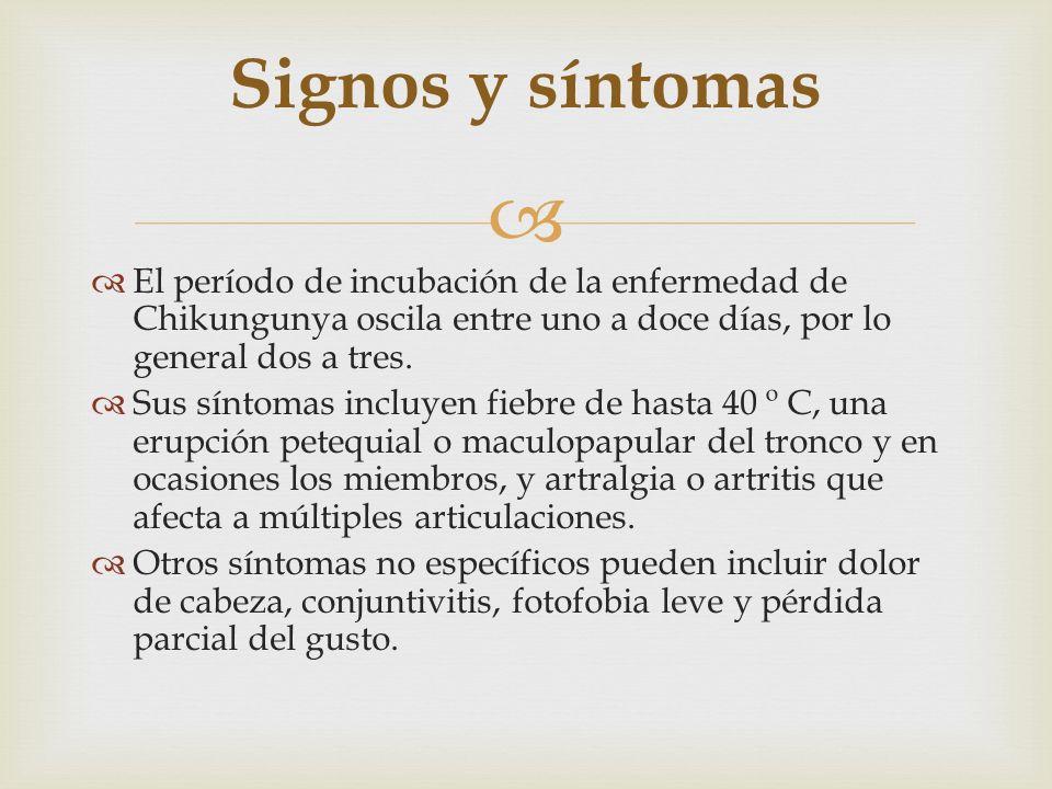 Signos y síntomas El período de incubación de la enfermedad de Chikungunya oscila entre uno a doce días, por lo general dos a tres.