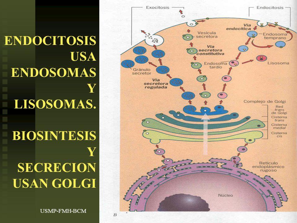 ENDOCITOSIS USA ENDOSOMAS Y LISOSOMAS