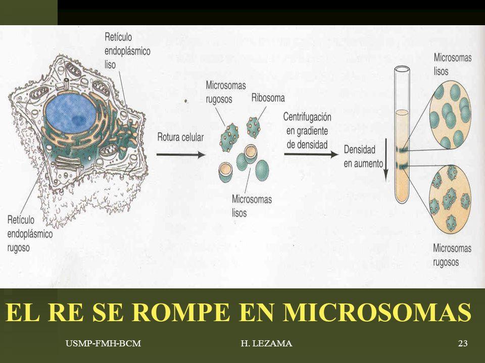 EL RE SE ROMPE EN MICROSOMAS