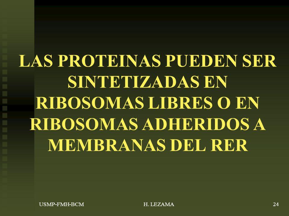 LAS PROTEINAS PUEDEN SER SINTETIZADAS EN RIBOSOMAS LIBRES O EN RIBOSOMAS ADHERIDOS A MEMBRANAS DEL RER