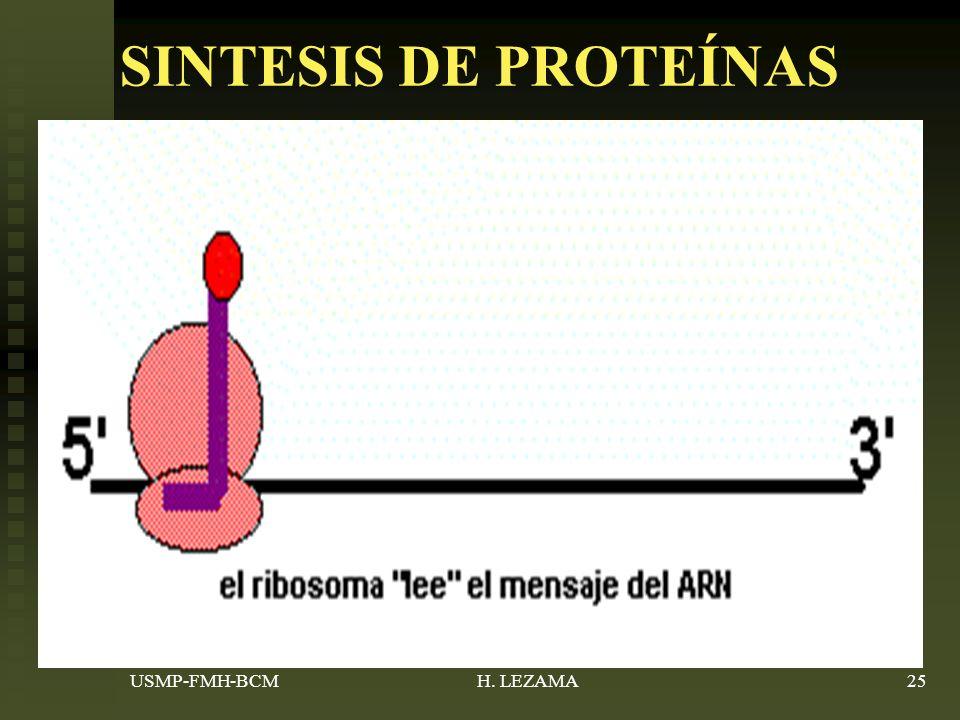SINTESIS DE PROTEÍNAS ARN mensajero-información (tripletes- codon)