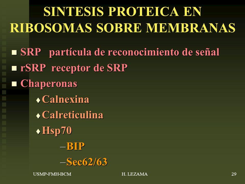 SINTESIS PROTEICA EN RIBOSOMAS SOBRE MEMBRANAS