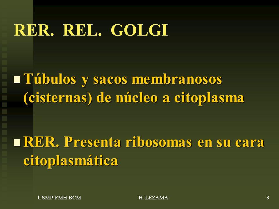 RER. REL. GOLGI Túbulos y sacos membranosos (cisternas) de núcleo a citoplasma. RER. Presenta ribosomas en su cara citoplasmática.