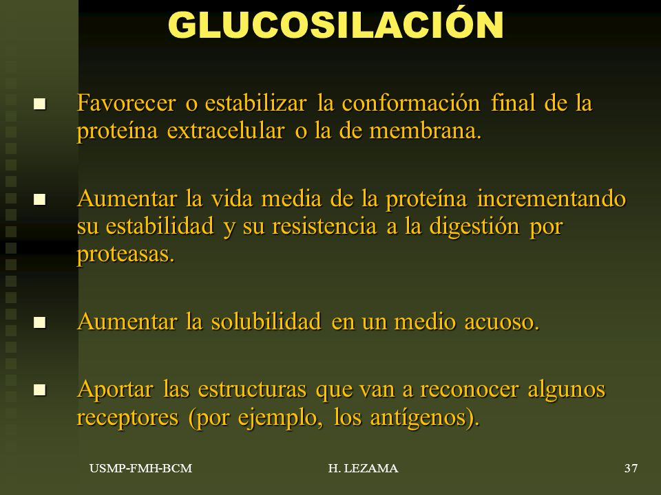 GLUCOSILACIÓN Favorecer o estabilizar la conformación final de la proteína extracelular o la de membrana.