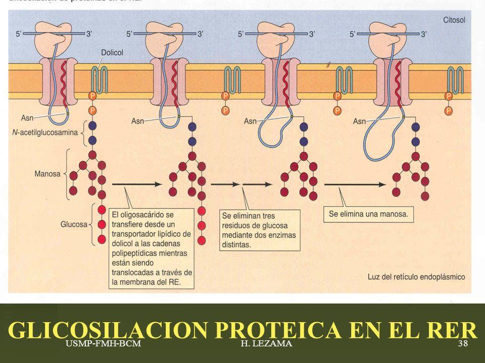 GLICOSILACION PROTEICA EN EL RER