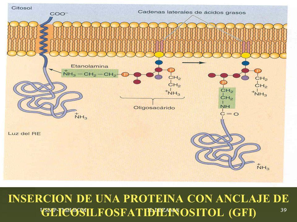 INSERCION DE UNA PROTEINA CON ANCLAJE DE GLICOSILFOSFATIDILINOSITOL (GFI)