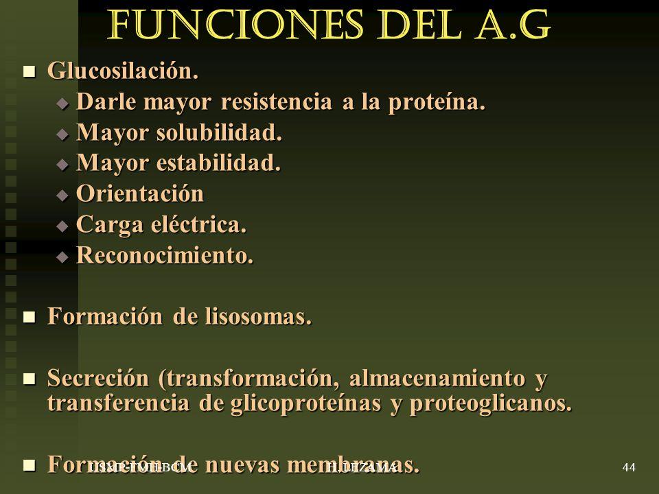 Funciones del A.G Glucosilación.