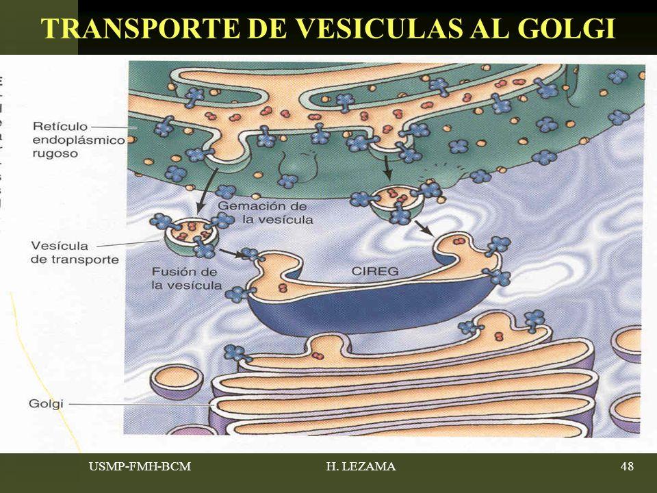 TRANSPORTE DE VESICULAS AL GOLGI