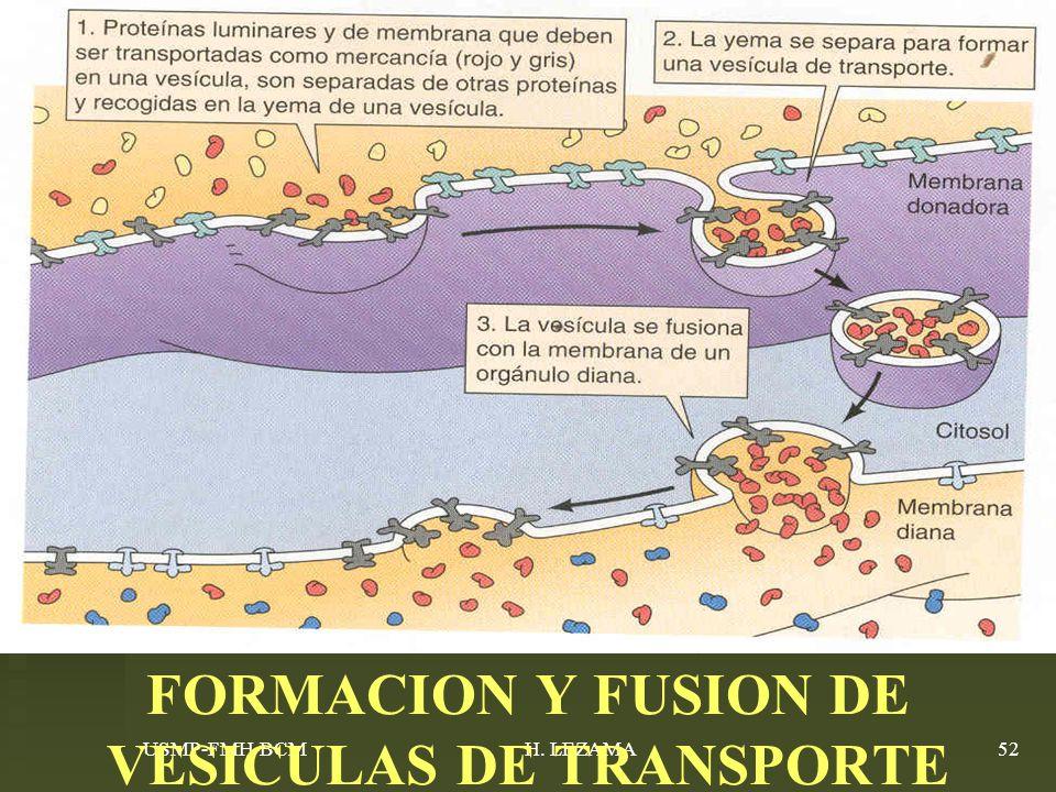 FORMACION Y FUSION DE VESICULAS DE TRANSPORTE