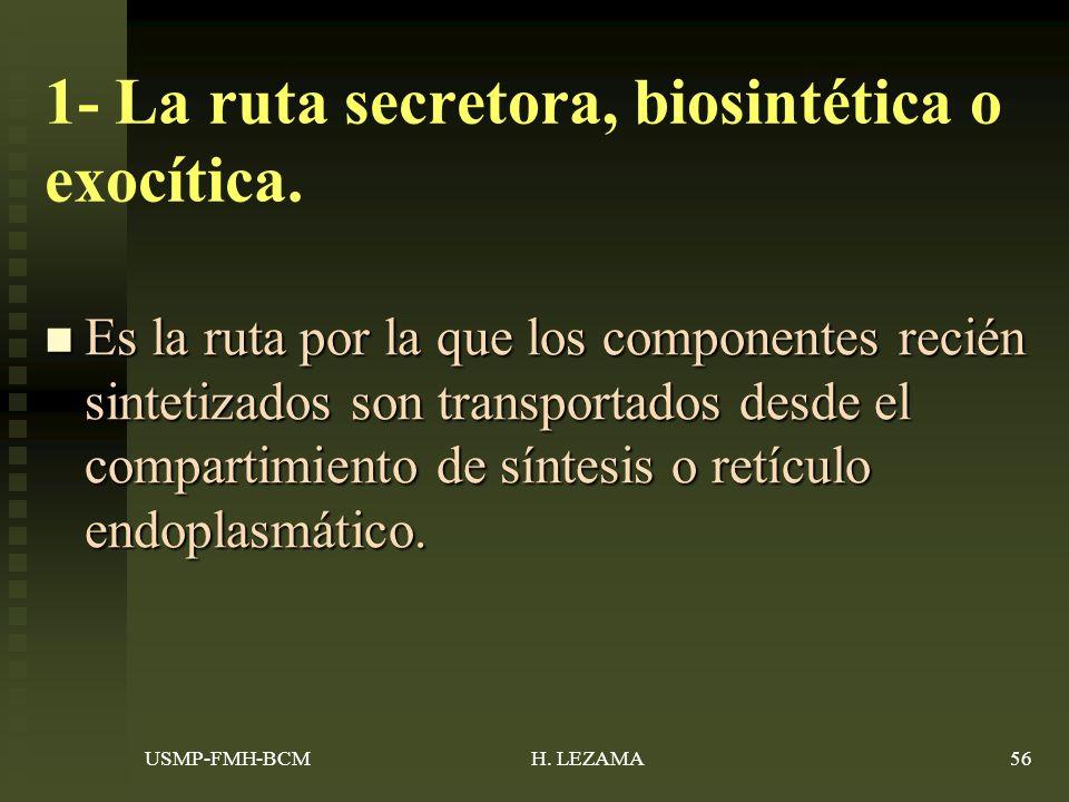 1- La ruta secretora, biosintética o exocítica.